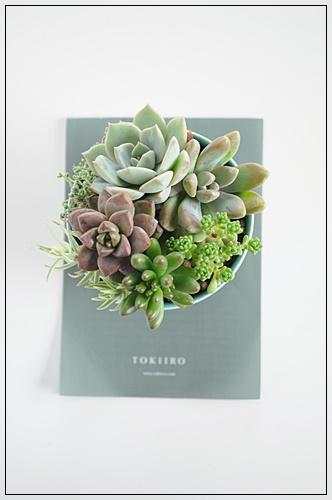 植物多肉.JPG