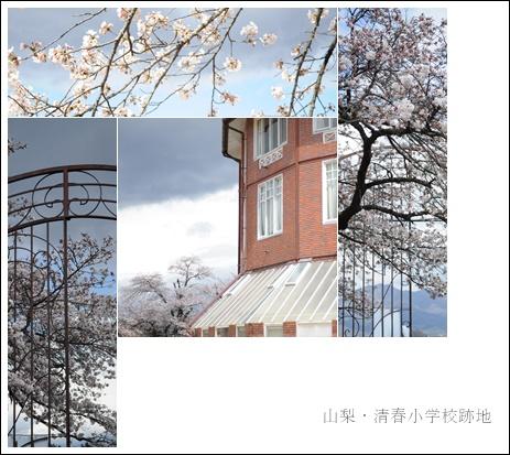 清春③.jpg